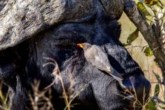W_Nature_Bird_Francois_Cloete_MG_8108
